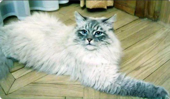 Дорофей, любимый кот Дмитрия